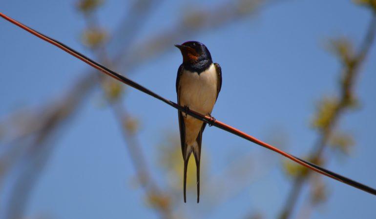 Τα πουλιά στον Ελληνικό πολιτισμό