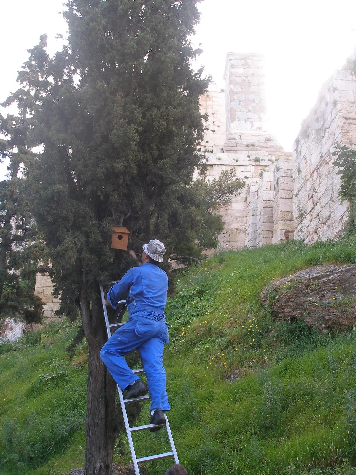 Τοποθέτηση τεχνητών φωλιών στην Ακρόπολη