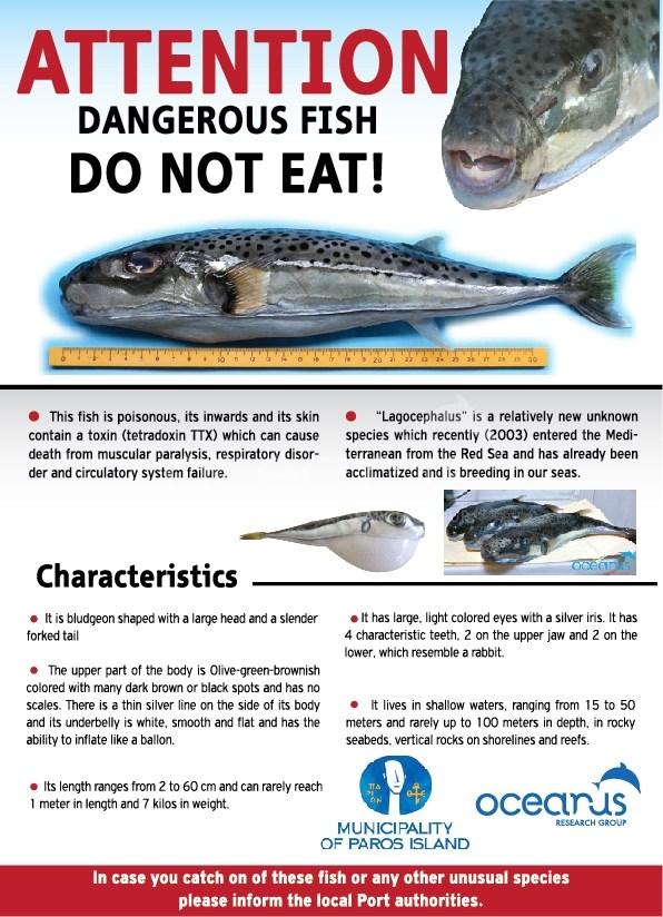 Ενημερωτική αφίσα που δημιούργησε ο Δήμος Πάρου και η ερευνητική ομάδα OCEANUS (http://www.oceanus.it)