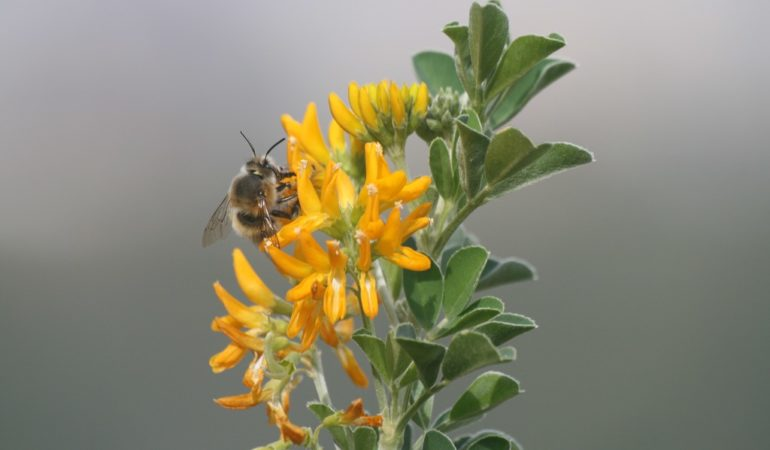 The behavior of the Honey Bees (Apis mellifera)
