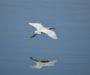 Πουλιά και ποίηση